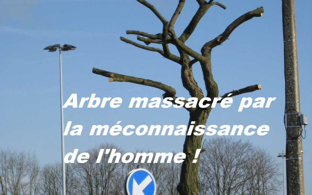 BOOMMEESTER.be    –    pourquoi pas ?